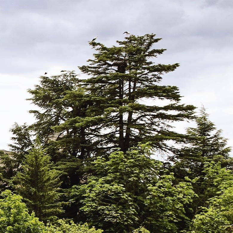 parqueflorida-hostal-ciguenas